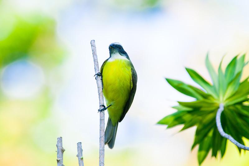 Toucans, Flycatchers and Woodpeckers - A Birder's Paradise in Honduras – Wild Junket Adventure Travel Blog